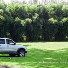 Blowpipe-Hedge