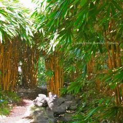 Sacred-Bali