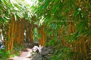 Sacred Bali