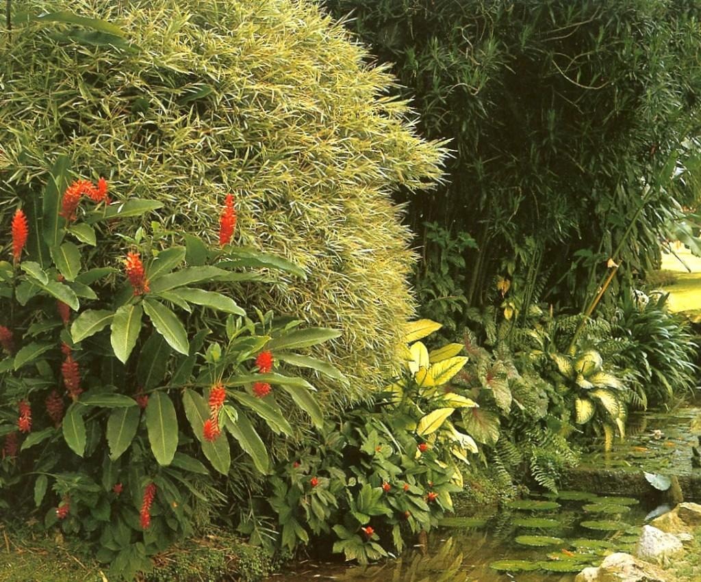 malay-garden2_2_2