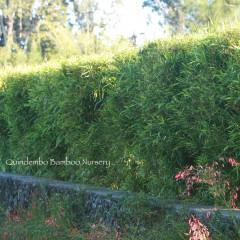 hetero-hedge-singapore