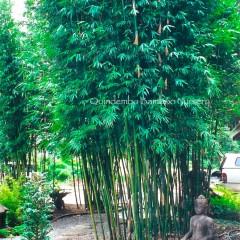 textilis-Weavers-Bamboo